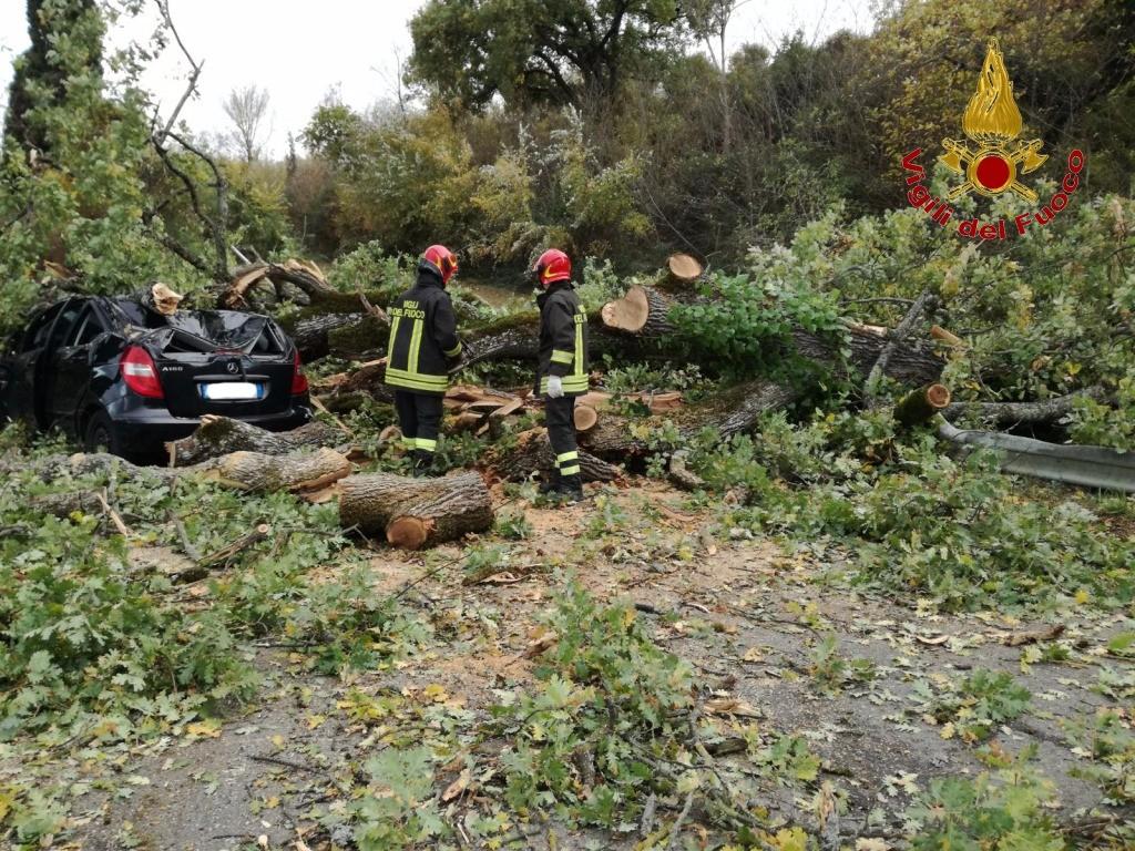 Grosso albero cade sopra ad un'auto, donna resta incastrata