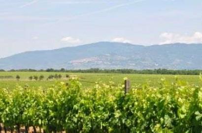 La Regione autorizza 895 viticoltori all'impianto di 600 ettari di nuovi vigneti