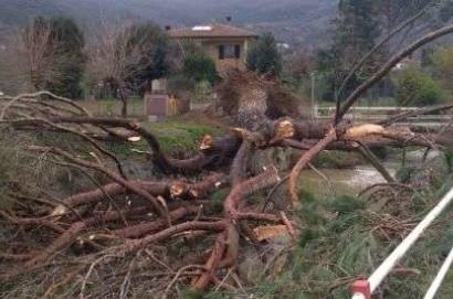 Vento forte: i danni ammontano ad oltre 38 milioni di euro. La mappa comune per comune