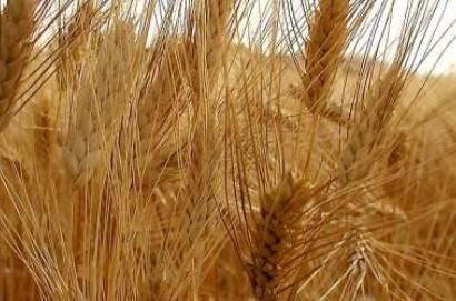 Tavola Rotonda  sul centro di stoccaggio di cereali di Cortona