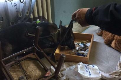 Operazione antidroga in Valdichiana: 3 arresti e 7 denunce per eroiana e hashish