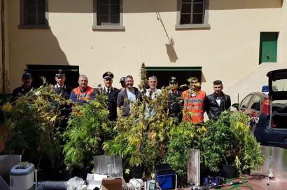 Coltivavavano e confezionavano in casa marijuana. Arrestati dai carabinieri di Cortona