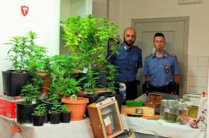 Arrestati padre e figlia : avevano una piantagione di Marijuana in casa