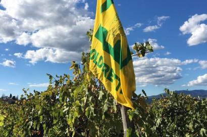 """Allarme Coldiretti Arezzo: """"vendemmia 2017 al 50% timore per la sopravvivenza delle imprese vitivinicole"""""""