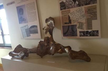 A Farneta con gli Elefanti....un milione di anni fa!!