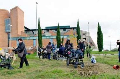 21 novembre, Festa dell'Albero: a Montepulciano due giornate di iniziative