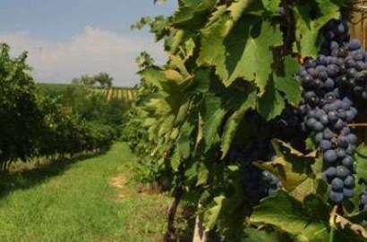 Laboratorio analisi agroalimentari di Montepulciano diventa punto di riferimento