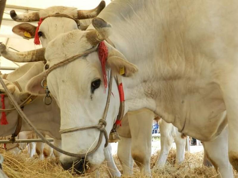 Fiera dell'Agricoltura di Montepulciano: tutto il programma